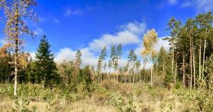 Natureza letão Florestas e céu foto de stock royalty free