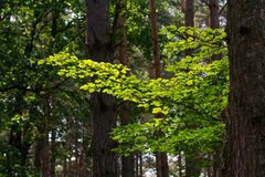 Natureza mágica, Fotografia de Stock Royalty Free