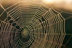 Natureza macro disparada de uma textura do fundo de Spiderweb para o design web fotografia de stock