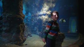 Natureza marinha no aquário, menino da criança que considera peixes no oceanarium grande com os animais aquáticos na água clara filme