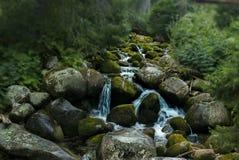 A natureza não é bonita? Por que você pensa assim? foto de stock royalty free