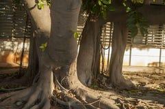 Natureza na cidade Imagens de Stock Royalty Free