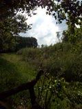 Natureza na floresta fotografia de stock royalty free