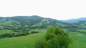 Natureza na inclinação nas montanhas árvores, arbustos, céu filme