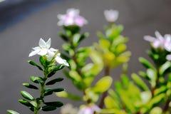 Natureza na paz Imagem de Stock