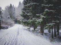 Natureza nevado no tempo de inverno imagem de stock