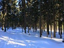 Natureza no inverno Fotos de Stock Royalty Free