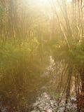 Natureza no myst Imagem de Stock