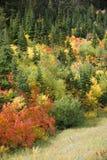 Natureza no outono Imagens de Stock Royalty Free
