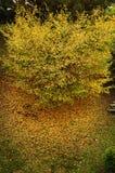Natureza no outono fotografia de stock
