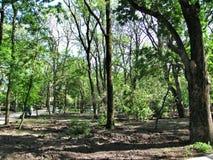 Natureza no parque Foto de Stock Royalty Free
