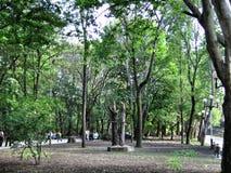 Natureza no parque Imagem de Stock