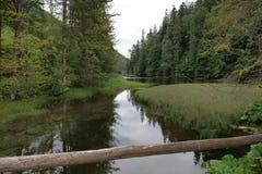 Natureza no parque nacional em Eslováquia Fotos de Stock