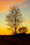Natureza no por do sol Fotografia de Stock