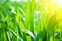 Natureza no verão Imagens de Stock