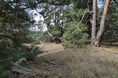 Natureza no verão madeiras fotografia de stock