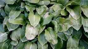 Natureza no verde Imagens de Stock Royalty Free