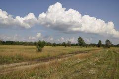 Natureza no verão prados Fotografia de Stock Royalty Free