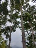 Natureza obscura Foto de Stock
