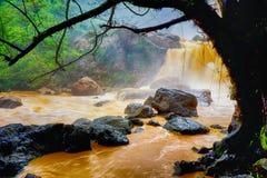 A natureza obtém molhada após a chuva pesada fotografia de stock