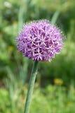 A natureza; os fenômenos naturais; Imagem de Stock Royalty Free