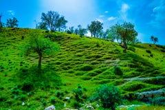 Natureza/paisagem verdes bonitas com grama imagens de stock