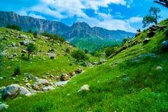 Natureza/paisagem verdes bonitas com grama fotos de stock