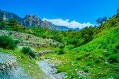 Natureza/paisagem verdes bonitas com grama imagem de stock