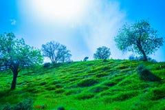 Natureza/paisagem verdes bonitas com grama imagens de stock royalty free