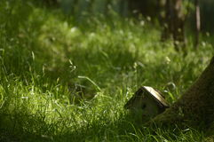 Natureza, parques e animais selvagens bonitos ingleses Imagens de Stock Royalty Free