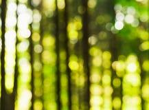 Natureza Photoshot do borrão fotografia de stock