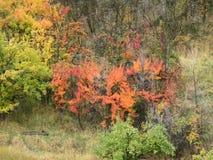 Natureza pintada Fotos de Stock Royalty Free