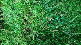 Natureza própria Fotografia de Stock Royalty Free