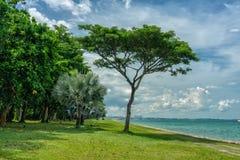 Natureza próximo no passeio de Marina South imagens de stock
