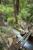 Natureza pura Imagem de Stock