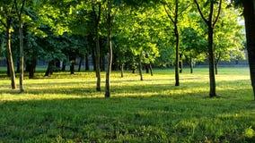 Natureza pura Imagem de Stock Royalty Free