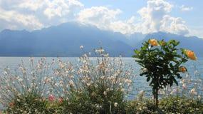 Natureza pura Lago Genave com flores de florescência Fotografia de Stock