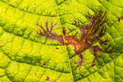 Natureza que leafdrawing imagens de stock royalty free