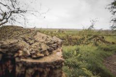 Natureza quebrada e ele raizes do ` s imagens de stock royalty free