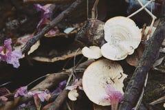 A natureza registra o close-up de madeira dos cogumelos fotografia de stock