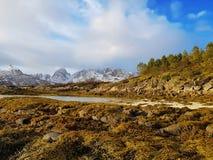 Natureza rochosa nas ilhas de Lofoten cercadas com montanhas nevados, árvores e musgo noruega imagens de stock
