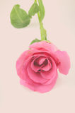 Natureza Rose Vintage Flowers Imagem de Stock Royalty Free