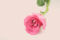 Natureza Rose Vintage Flowers Fotografia de Stock