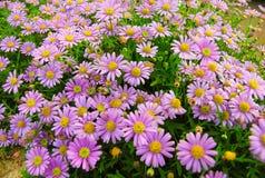 Natureza roxa abstrata Fotografia de Stock Royalty Free