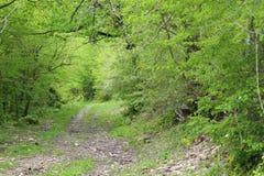A natureza selvagem é selva fascinante Foto de Stock Royalty Free