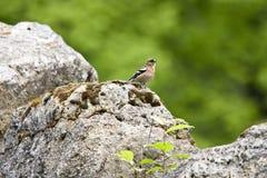 Natureza selvagem Fotos de Stock
