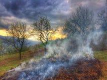 Natureza selvagem Fotos de Stock Royalty Free