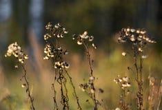Natureza selvagem de Rússia no verão fotos de stock