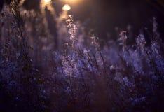 Natureza selvagem de Rússia no verão imagens de stock