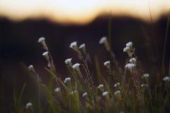 Natureza selvagem de Rússia no verão Imagens de Stock Royalty Free